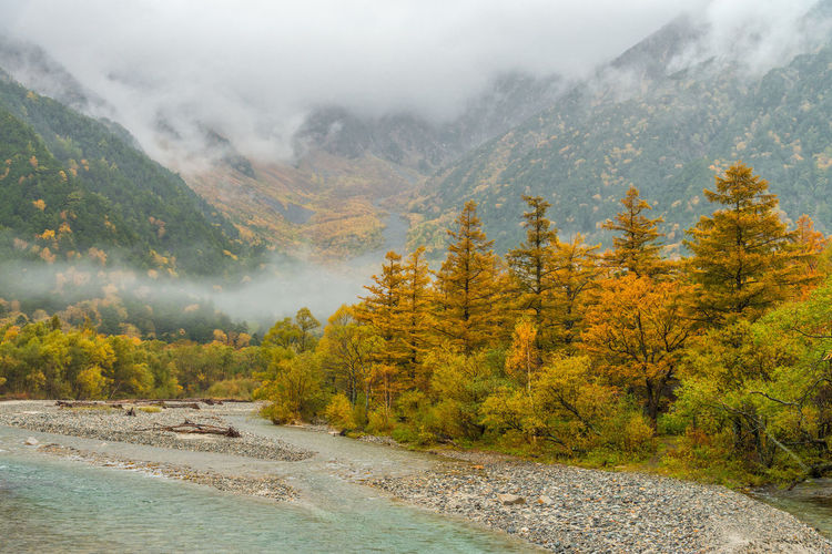 Kamikochi in rainy day and foggy weather with autumn colors season trees. Autumn Beauty In Nature Change Environment Fog Forest Kamikochi Land Landscape Mountain Mountain Range Nagano Nature No People Non-urban Scene Outdoors Pine Tree Pine Woodland Plant Scenics - Nature Tranquil Scene Tranquility Tree Water WoodLand