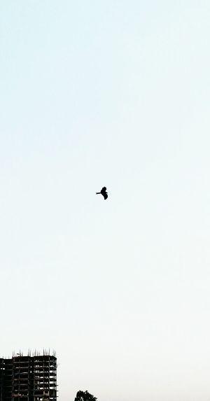 Alone, With Freedom, I Fly Towards My Destiny !