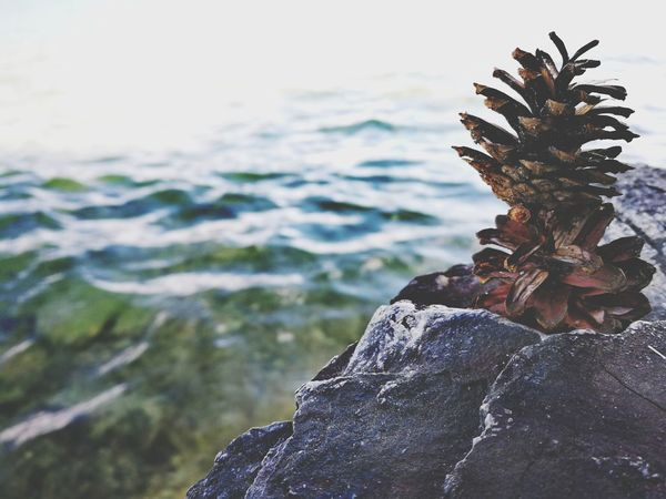Nature Rock - Object No People Outdoors Sea Beauty In Nature Close-up Pinecone Pineconeart Pinecones EyeEmBestPics EyEmNewHere EyeEm Best Edits Capture The Moment EyeEmBestEdits EyeEm Selects Exceptional Photographs The Great Outdoors - 2017 EyeEm Awards EyeEm Gallery My Unique Style Outdoor Photography Getting Inspired Beauty In Nature Freshness Fragility