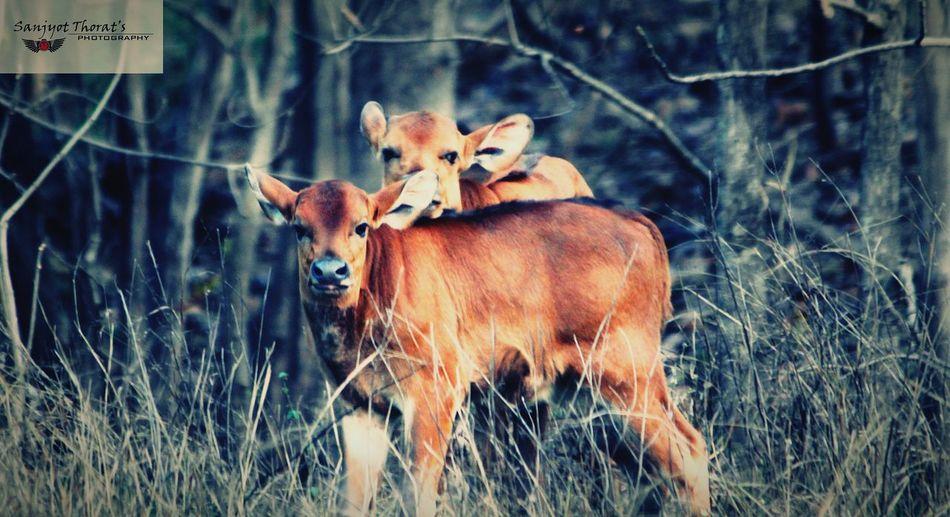 Stp Wildlife 😘😘 First Eyeem Photo