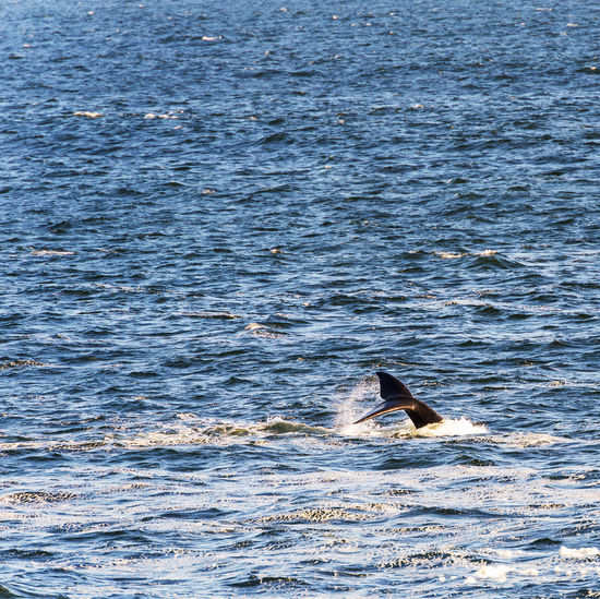 View of a swimming in sea