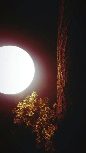 Light Lamp Astronomy Tree Moon Sky Moonlight