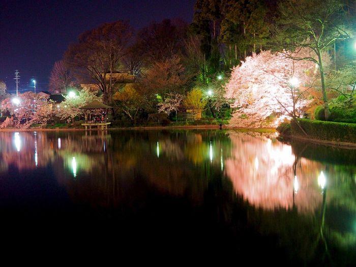 🌸💡✨儚く美しい桜を✨2倍堪能出来る嬉しさ☺️✨ Water Reflections Night View Beauty In Nature Lake View EyeEm Gallery Light And Shadow Reflection Nagano, Japan 臥竜公園