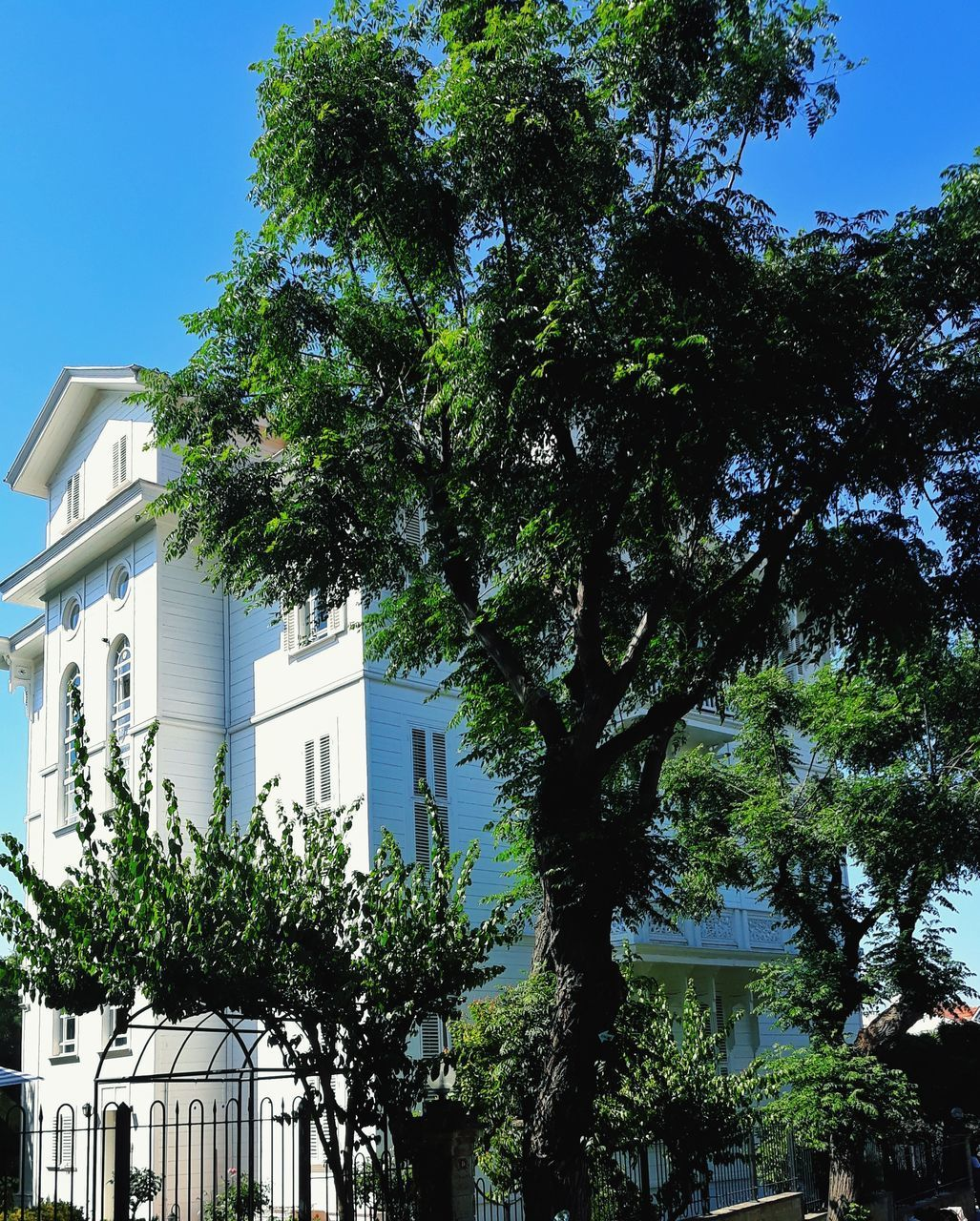 tree, plant, built structure, architecture, building exterior, building, sky, growth, nature, day, no people, low angle view, outdoors, clear sky, green color, sunlight, city, residential district, house, branch, place