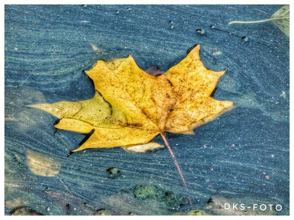 Sweden The True Story Eskilstuna-streetphotography Maple Leaf Maple Leaf Autumn Change Dry Close-up