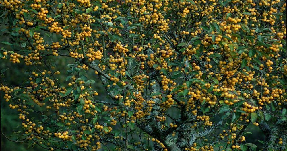 Jardin Jardins Jardinsdeau Arbre Pommier Pommes Automne🍁🍂🍃 Autumn Autumn🍁🍁🍁 Puisaye Coeurdepuisaye Bleneau Yonne Yonnetourisme Igersyonne Igersbourgogne Grainedenature