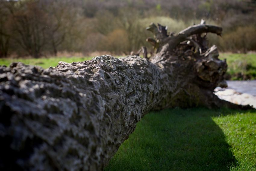 Nature No People Tree Outdoors Day Dead Tree Landscape Close-up Beauty In Nature Countrywalks Countryside EyeEmNewHere Country Life