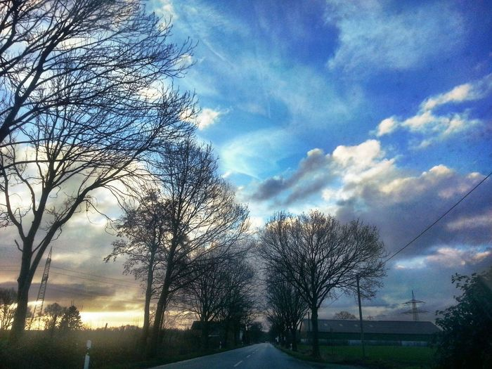 Aus dem Auto raus ... Tree Sky Cloud - Sky Nature Growth No People Outdoors Beauty In Nature DayTree Beauty In Ordinary Things New On Eyem Low Angle View The Way Forward