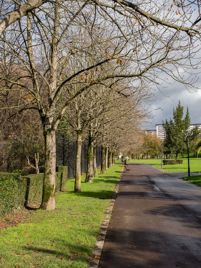 View of trees along road in park