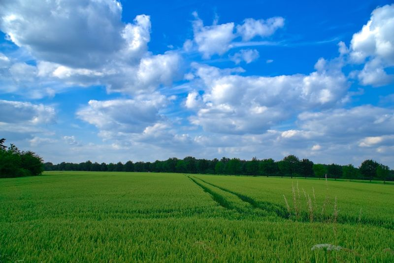 Agriculture Beauty In Nature Blue Cloud - Sky Field Grass Green Green Color Landscape Nature No People Outdoors Rural Scene Scenics Sky Tranquility Wald Und Wiesen