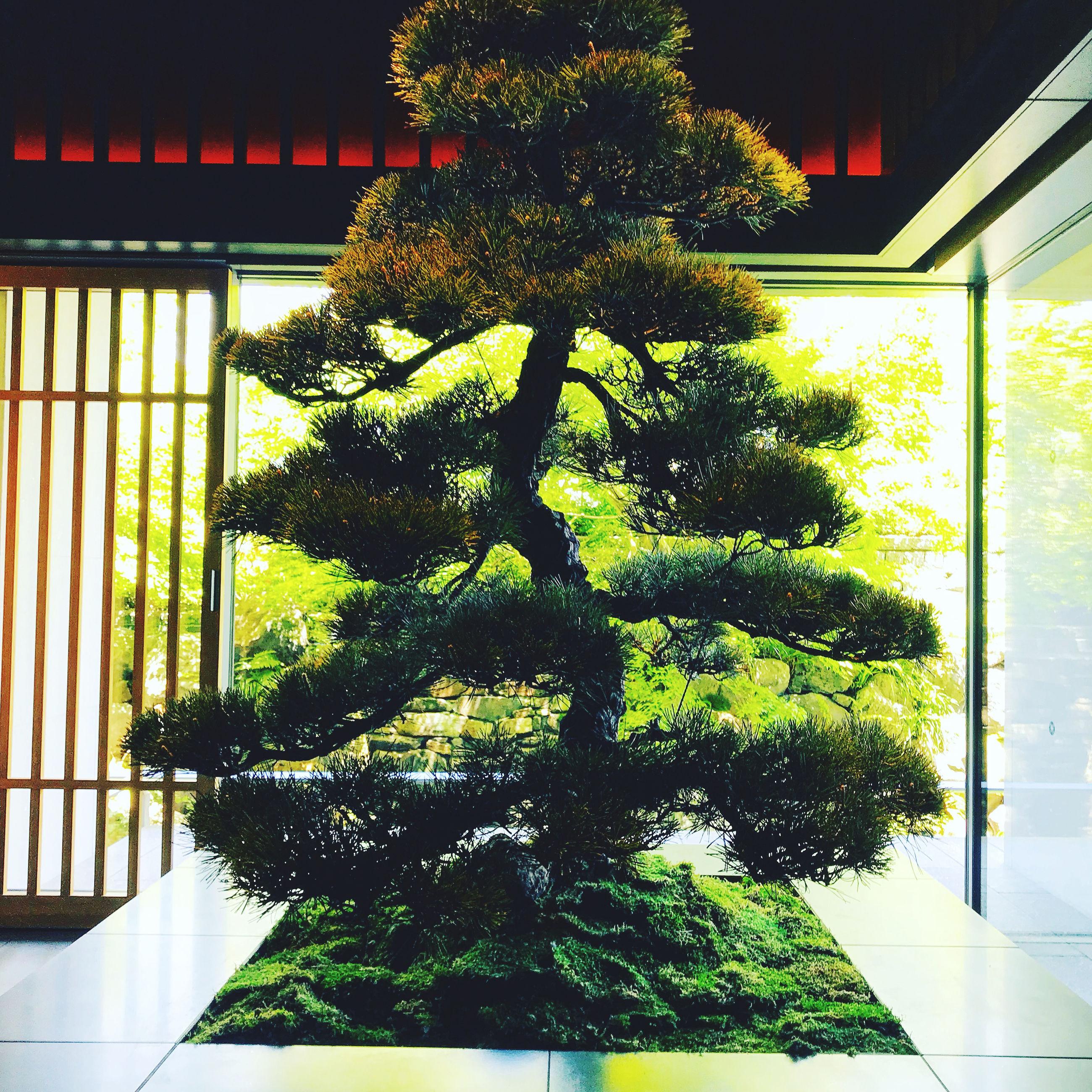 TREE BY HOUSE WINDOW