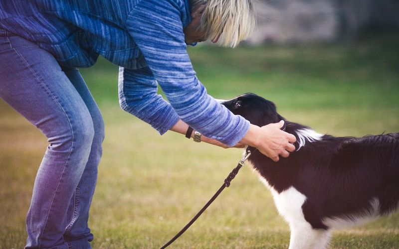 Release The Herder   Casual Clothing Lifestyles Leisure Activity Side View Men Focus On Foreground Field Togetherness Feeding  Holding Person Outdoors Day Freshness Dog Herding Border Collie EyeEm Gallery EyeEm Masterclass EyeEm Best Shots Eye4photography  Animal Canine Love Pet