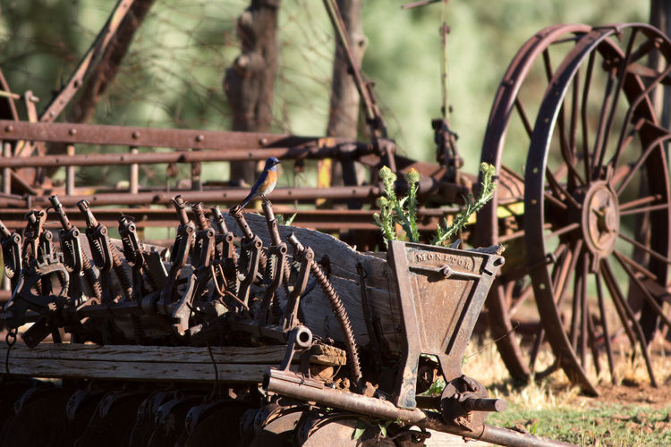Close-up of old iron objects
