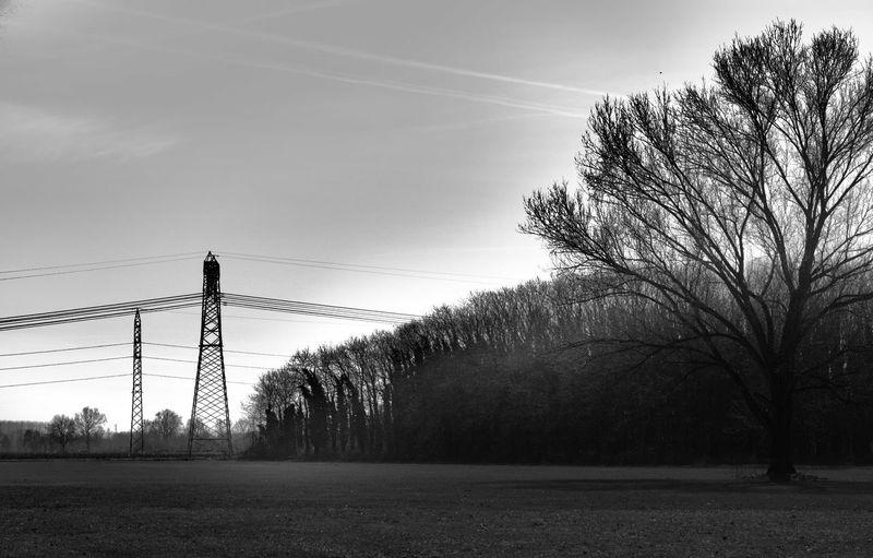 300mm Visionary Pentax Blackandwhite Bnw Collection PENTAX K-1 Enjoying Life Planet Earth Tree Bird Sky Telephone Line Silhouette Razor Wire Outline Sunset Electricity Pylon Power Line
