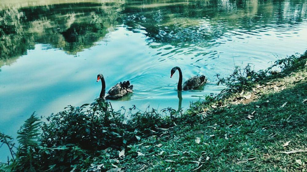 Lago Pq. Ibirapuera Love