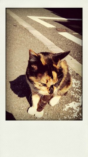 Cat Fine Day