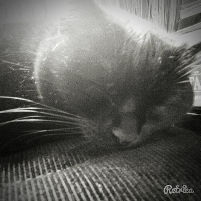 Miaouw? Mycat♥