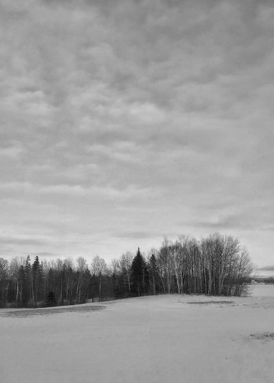 Snow covered field and winter tree line. Agriculture Treeline Snow Winter Vertical Black And White Snow Winter Cold Temperature Nature Weather Tree Landscape Beauty In Nature Tranquility Scenics Bare Tree Sky Field Cloud - Sky Tranquil Scene Day Outdoors No People Shades Of Winter