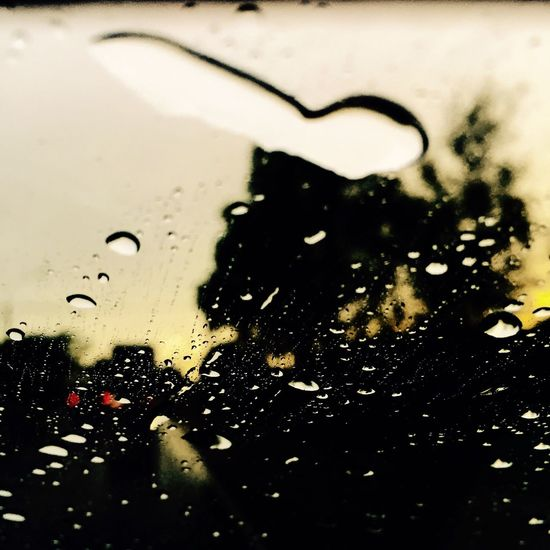 The May Rain Full Of Love Nature The Moscow' Rain's Songs