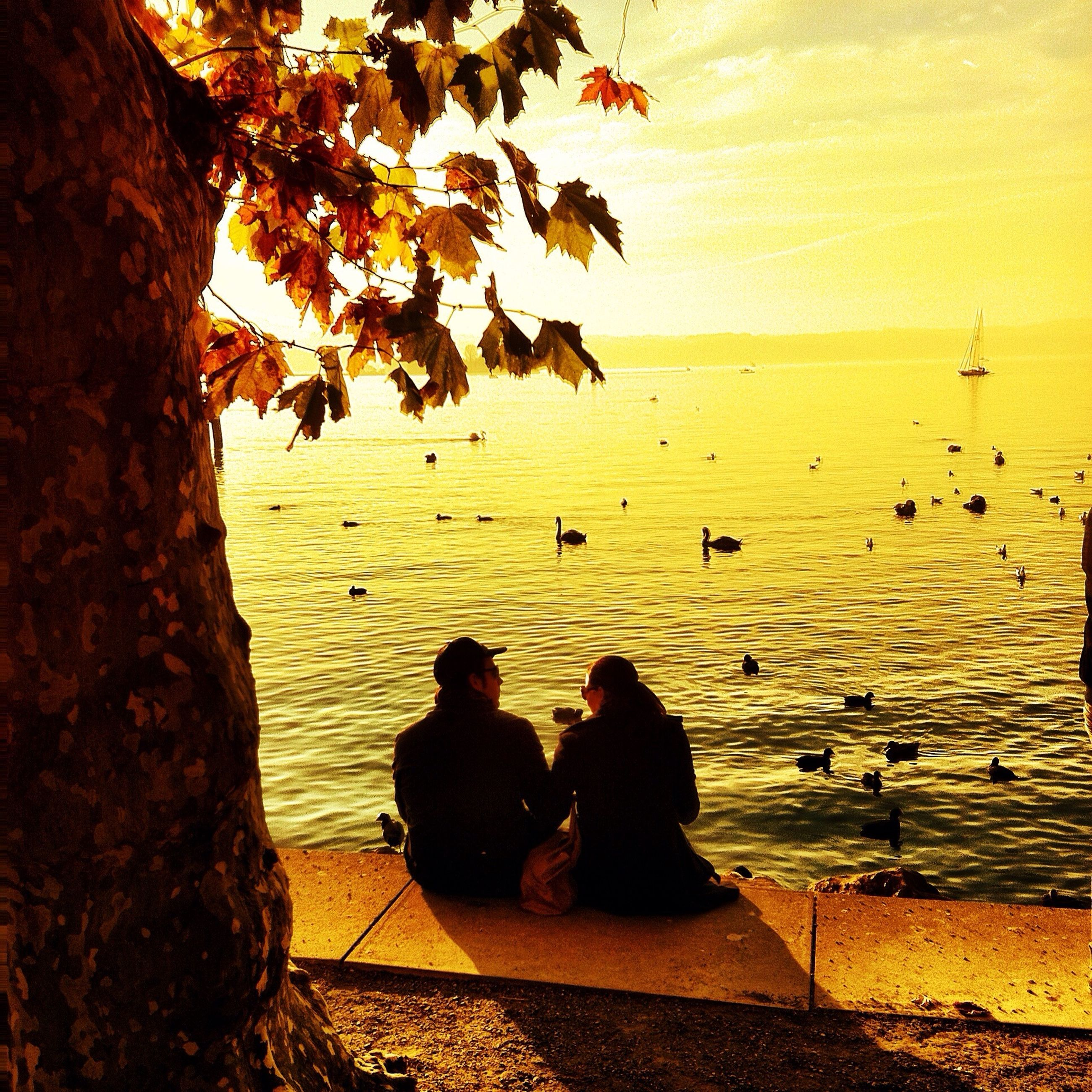sitting, lifestyles, men, leisure activity, person, tree, nature, relaxation, beauty in nature, togetherness, sunset, silhouette, tranquility, scenics, tranquil scene, water, sea, branch