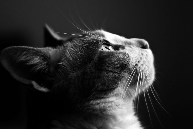 Animal Head  Animal Themes B&w Bnw Bnw_collection Bnw_friday_eyeemchallenge Bnwphotography Cat Domestic Animals EyeEm Nature Lover Feline Katzen Mammal One Animal Pets