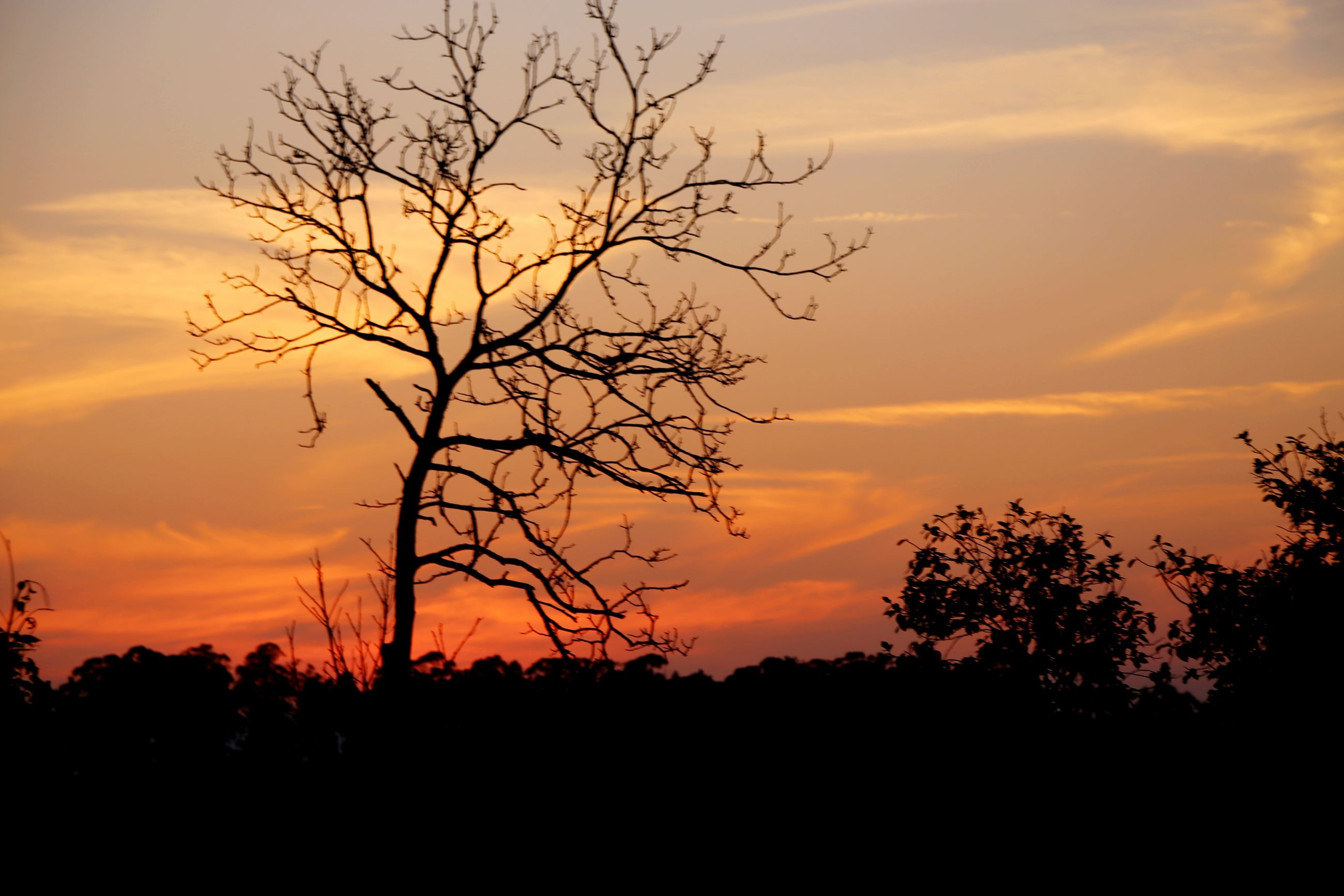 sunset, silhouette, tree, sky, beauty in nature, tranquility, scenics, tranquil scene, orange color, branch, nature, cloud - sky, idyllic, dramatic sky, bare tree, cloud, majestic, landscape, growth, low angle view