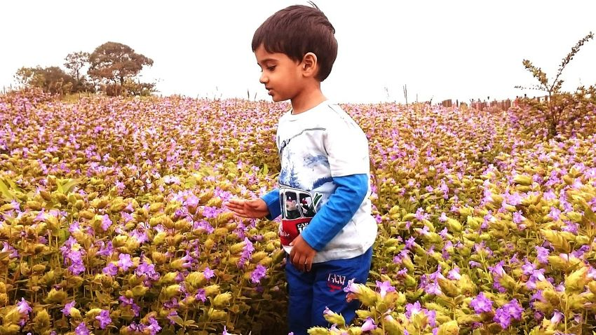 Kas platue outing Flower Nature Beauty In Nature Flowerbed Field Child Outdoors Freshness Growth Plant Summer One Person People Children Only Poppy Young Adult Horticulture Day Young Women Flower Head EyeEmNewHere