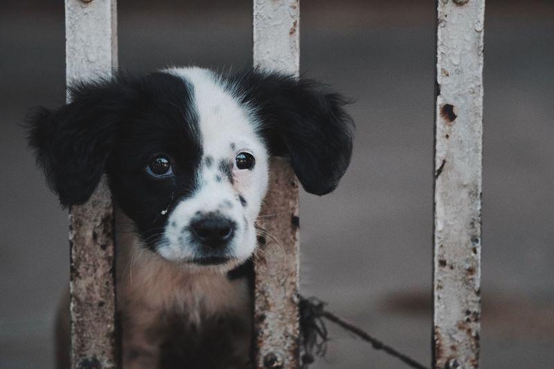 Sad Dog Animal Portrait Dalmation Save Animals Crying Dog Sad Animals Behind Bars Imprisoned Animal Prison Sad Dog Kota Tua Cry One Animal Dog Canine Domestic Animals Pets Domestic Mammal Animal Eye Animal Body Part