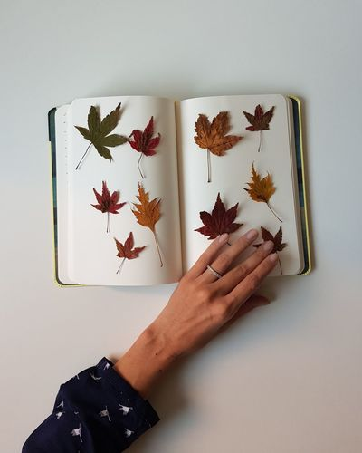 Book of nature Human Body Part Human Hand Leisure Activity Holding Only Women Nail Polish Fingers Home Interior Colored Leaves Large Group Of Objects Autumn Foilage Book The Week On EyeEm October Tree Beauty In Ordinary Things Paper Nature Variation Sketch Pad Memories White Background Personal Perspective