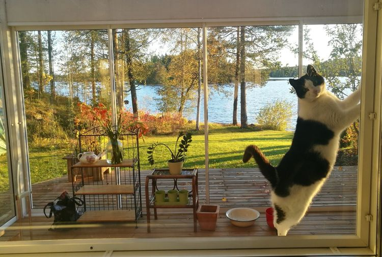 """""""A View Out Of the Window"""" Autumn colors Lake View Cat Feline Autumn colors Animal Themes Sky Looking Through Window"""