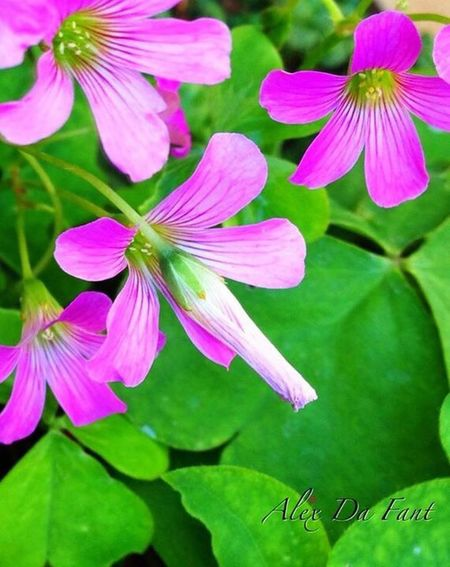 Flower Growth Nature Petal Fragility Beauty In Nature Plant Leaf Green Color Freshness No People Blooming Close-up Day Outdoors Flower Head