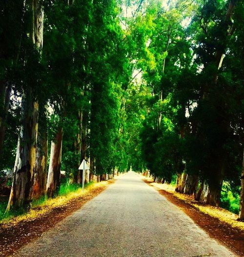 Empty Road Road Green The Way Forward