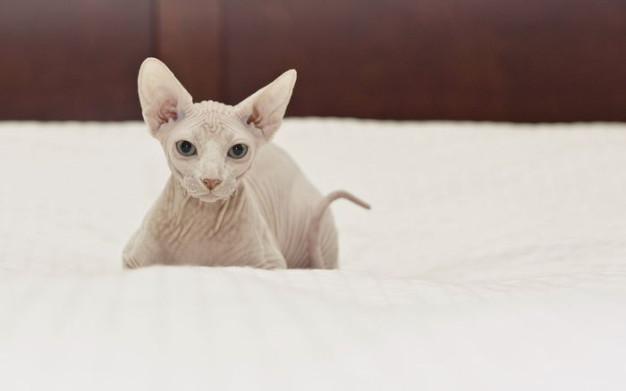 cats are life♥ Cats Kitty Hairless Cat Cats Are Life