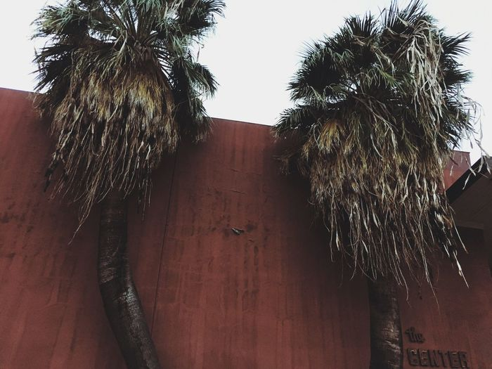 Hipster Palm