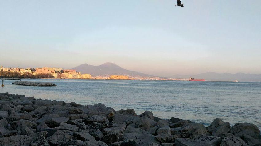Napoli Seagull Vesuvio Vesuvius  Vulcano Golf Of Naples Gulf