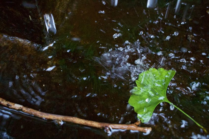 Eoskissx7i Hachijo-island 八丈島 Water Water_collection Waterdrops Tokyo,Japan Autumn Green Nonfilter