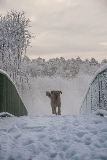 Day Dog Mammal Nature No People One Animal Outdoors Rural Scene Snow Winter