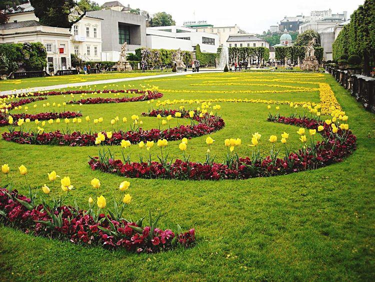 Salzburg Flowers Flower Collection Historical Building Flowers,Plants & Garden City Gardens