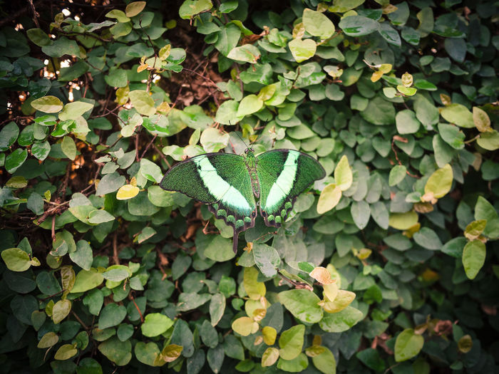 High angle view of ivy growing on plant