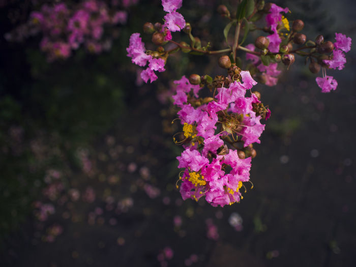 Close-up of pink flowers growing on branch