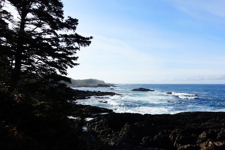 Pacific Rim National Park Ucluelet Vancouver Island Canada Road Tripping Abventure Exploring Travel Clouds Wild Nature Forest Sea Tree