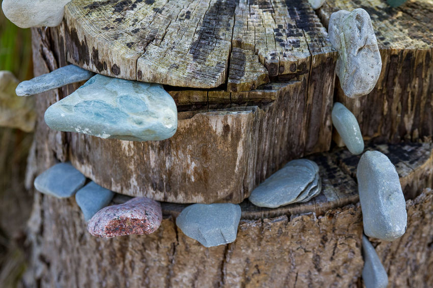 Beauty In Nature Check This Out Forest Forest Photography GERMANY🇩🇪DEUTSCHERLAND@ Hello World Hi Hi! Mecklenburg Mecklenburg-Vorpommern Mecklenburgvorpommern Ostsee Ostseeküste Ostseestrand Still Still Life Still Life Photography StillLifePhotography Stone Stone - Object Taking Photos Taking Pictures The Great Outdoors - 2016 EyeEm Awards Wood - Material Wood Art