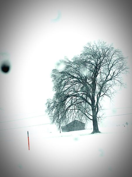 Snowstorm2016 Passenger Side View Passenger View Snow Ice Let It Snow Nature_collection Snowday Beautiful Beautiful Day Eyemnaturelover Tree Snowy EyeEm Nature Lover Barn Landscapes With WhiteWall