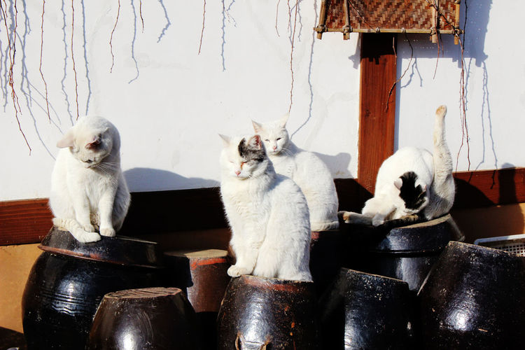 Cats sitting on containers against wall