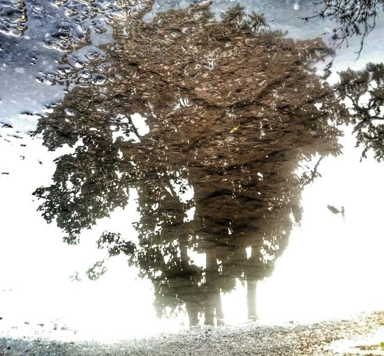 The Innovator Reflection Tree Surreal Atmospheric Change In Perspective Feel The Journey Showcase June