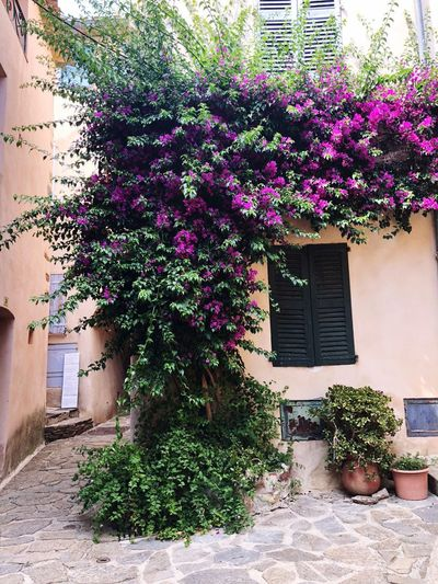IPhoneography EyeEmNewHere Plant Architecture Growth Built Structure Building Exterior Nature Building Flowering Plant Flower Creeper Plant Window House Ivy