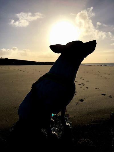 Cloud Sun Beach Pets Silhouette Land Domestic Animals Sky Mammal Sunset Animal Cloud - Sky One Animal Dog Canine Animal Themes Nature Vertebrate Water Sea