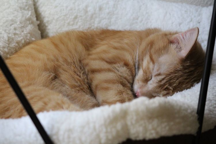 Close-up of brown cat sleeping on pet bed