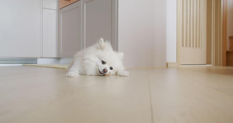 Portrait of white dog sitting on tiled floor