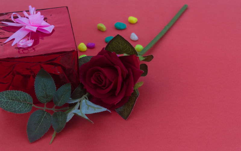 High angle view of pink roses on red table